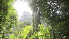 In the tropical jungle Stock Footage