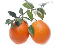 Stock Photo of fresh oranges