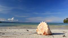 Seashell on tropical beach - stock footage