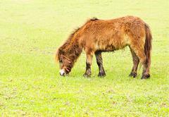 foal in a field - stock photo
