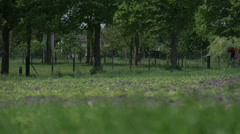Tour cycling in Dutch landscape Stock Footage
