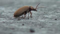 Beetle Flying Off - stock footage