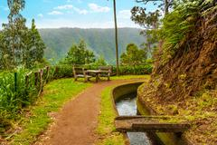 Stock Photo of along the levada, madeira