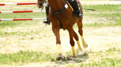 Equestrian show jumping Stock Footage