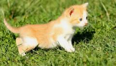 Kitten on  grass Stock Footage