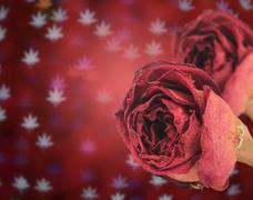 beautiful dry red rose on blur maple leaves bokeh background - stock photo