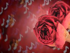 dual beautiful dry red rose on blur note bokeh - stock photo