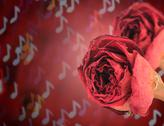Stock Photo of dual beautiful dry red rose on blur note bokeh