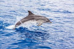 Stock Photo of dolphin