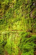 moss wall with fern nearby - stock photo