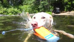 Retriever Fetching Toy in Lake 2 Stock Footage