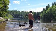 Stock Video Footage of Dogs at the Lake 1