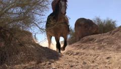 Horse walking by on dusty trail. Stock Footage