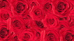 Roses background. - stock footage