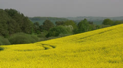 Yellow Field with Oil Seed Rape on Rügen Island - Baltic Sea, Northern Germany Stock Footage