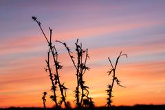 Thistle, dry grass, nature background Stock Photos