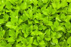 Stock Photo of green fresh leaves