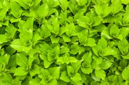Green fresh leaves Stock Photos
