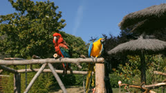 Colored parrots in a zoo Stock Footage