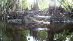 Alligator Stock Footage