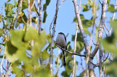 Insectivorous bird Stock Photos