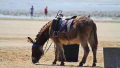 Donkey at the Seaside HD Stock Footage