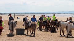 Group of Children Riding Donkeys at the Seaside HD Stock Footage