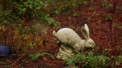 Stone bunny rack focus rain branches Stock Footage