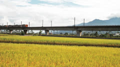 Paddy field in the morning for adv or others purpose use with nice bridge Stock Footage