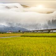 Paddy field in the morning for adv or others purpose use with nice bridge Stock Photos
