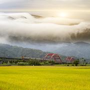 Paddy field in the morning for adv or others purpose use with nice bridge - stock photo