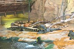 several crocodiles in the aviary at the farm - stock photo
