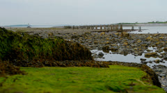 Seaweed-Covered Rocks and Piers Stock Footage