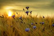 Stock Photo of summer sunset over grass field with shallow focus