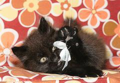 Kitten in an ambush - stock photo
