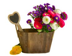 Aster flowers in wooden pot Stock Photos