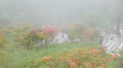 Fog and azalea Stock Footage