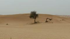 Abu Dhabi autiomaassa 3 (zoom) Arkistovideo