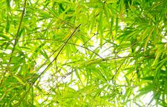 Bamboo leaves background Stock Photos
