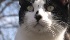 Tuxedo cat turning his head quickly - stock footage