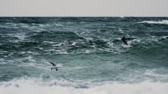 Seagulls at stormy Ocean Stock Footage