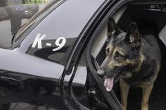 Police K-9 in Patrol Car - stock photo