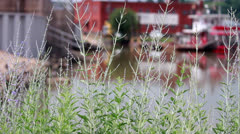 Tall Grass with River Boats Stock Footage