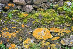 Rough rocky terrain abstract moss background Stock Photos
