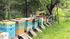 Bees. Beekeepers working in apiary. - stock footage