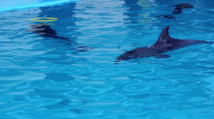 Group of dolphins swimming in water at aqua park. Dolphins under water in pool Stock Footage