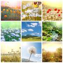 Flowers collage Stock Illustration