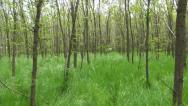 Stock Video Footage of POV of Walking in Tall Grass in Forest, Footsteps View, Following a Butterfly
