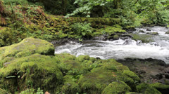 Cedar Creek Grist Mill Stream with Water Flowing and Green Moss Stock Footage