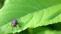 Insect  fly  on  leaf Stock Footage